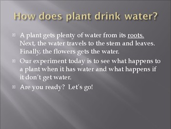 PPT- All About Plants