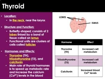 Endocrine System - Homeostasis, Hormones, Glands, Disorders (ADVANCED)