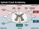 PPT - Nervous System (ADVANCED)