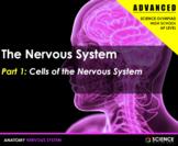 PPT - Nervous System (ADVANCED) - Neurons, CNS/PNS, Action