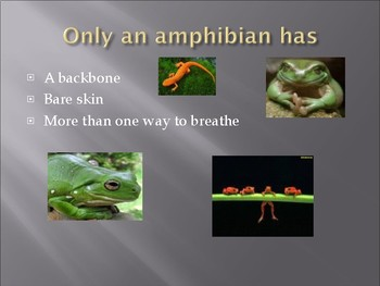 PPT- Reptiles and Amphibians