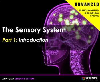 BUNDLE - Body Senses (Vision, Hearing, Smell, Taste, Touch