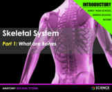 PPT - Skeletal System Introduction - Bone Structure, Skele