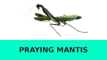 PRAYING MANTIS INFORMATION REPORT