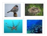 PREK Unit habitats where animals live houses homes shelter REAL photos ESL