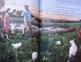 PRESIDENT BARAK OBAMA'S BIOGRAPHY ILLUSTRATED