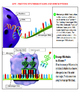 PROTEIN SYNTHESIS STAGES AND DESCRIPTIONS