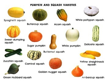PUMPKIN AND SQUASH VARIETIES