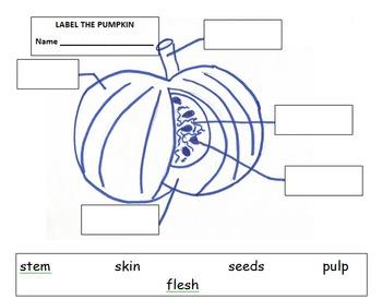 PUMPKIN DAY- LIFE CYCLE COMBO