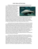 Pacific Salmon and Their Decline