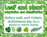 Dichotomous key, plant adaptation gallery walk (in person