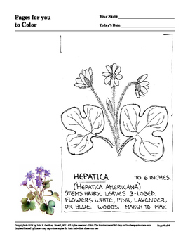 Pages to Color 3 - Spring Wildflowers