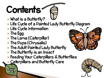 Painted Lady Butterflies ~ An Interactive Presentation of Their Life Cycle