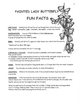 Painted Lady Butterfly Fun Facts