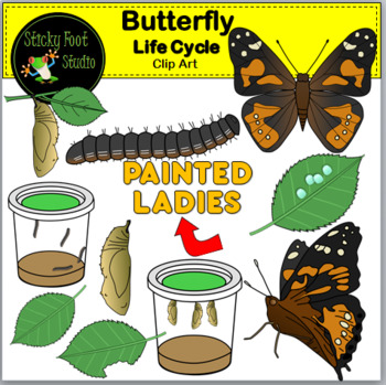 Painted Lady Butterfly Life Cycle Clip Art By Sticky Foot Studio