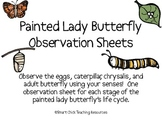 Painted Lady Butterfly Life Cycle Observation Sheets, Set of 4