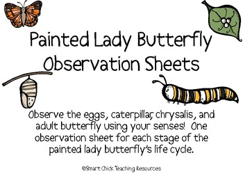 Painted Lady Butterfly Life Cycle Observation Sheets Set of 4 by