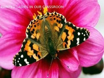 Painted Lady Presentation