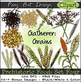 Prehistoric Food CLIPART (Set Four): Gatherer Grains {Paez