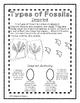 Paleontologist Notebook: Fossils