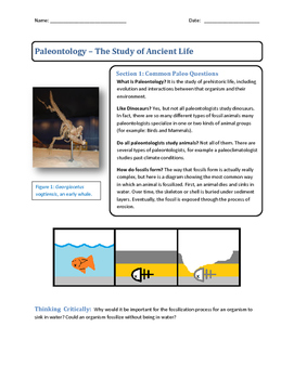 Paleontology - The Study of Ancient Life