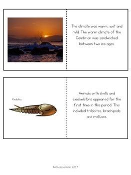 Paleozoic Era : Cambrian Period