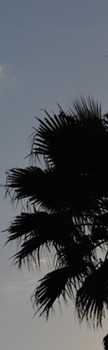 Photo Products - Palm Tree Shadow Theme
