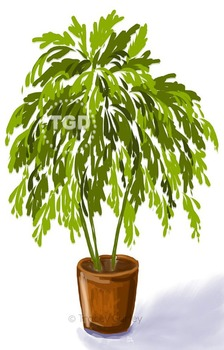 Palm Tree in Pot - tropical potted plant art, Printable Tracey Gurley Designs