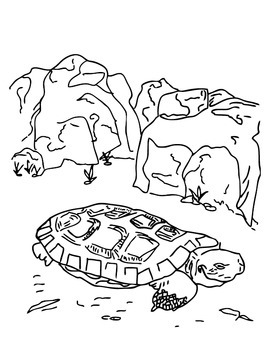 ANiTAiLS:Pancake Tortoise Story, Crossword, Coloring Page and More