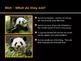 Panda Powerpoint