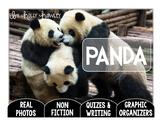 Panda-A Research Project