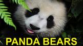 Panda Bears - PowerPoint