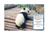 Panda Maths - Multiplying 2 and 3 digits by 1 digit.