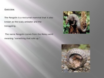 Pangolin - Power Point - Information Facts Pictures