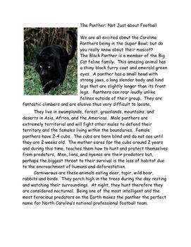 Panther: Super Bowl Mascot of Carolina Panthers