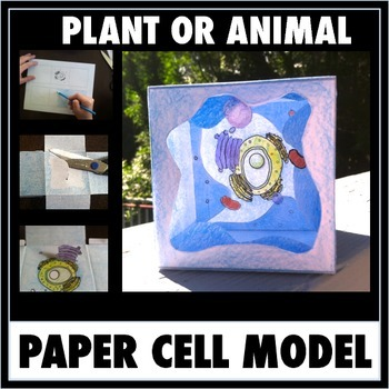 Cell Model - Printable Pattern For A 3-D Free-Standing Paper Cell Model