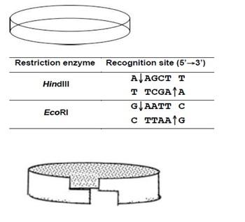 Paper Plasmid and Transformation Simulation e-Lab