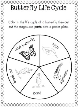 paper plate butterfly life cycle by clever classroom tpt