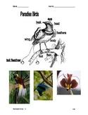 Paradise Birds - Illustrated Graphic Organizer