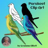 Parakeet Clip Art