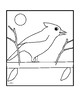 Parallel and Perpendicular Lines Bird Coloring Activity