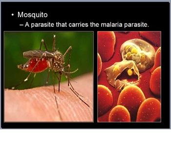 Parasites Lesson