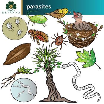 Parasites - Ectoparasites, Endoparasites, Plant Parasites