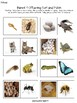 Parent and Offspring - Science Life Cycle Sort Animals and Insects