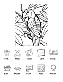 Parrot Coloring /th/ Final Position Worksheet