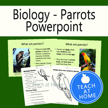 Parrot Power Point Presentation and Worksheets, Homeschool, Classroom