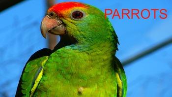 Parrots - Powerpoint