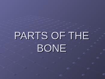 Part of Bone