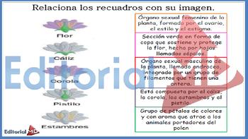 Partes de la Flor y sus Funciones MATERIAL PARA IMPRIMIR