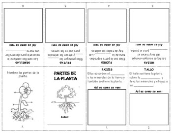PARTES DE LA PLANTA - LIBRITO